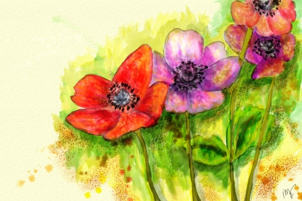 Poppies_vista